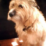 Fritz, my old friend. Sadly no longer with us, sadly missed...
